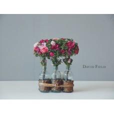 3瓶玫瑰花組(多色)